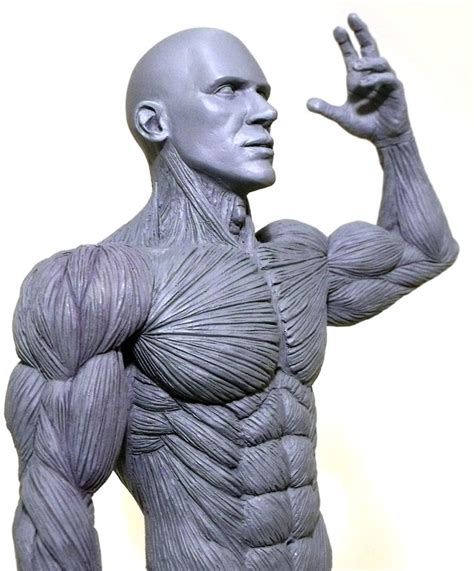 male artist models pin by germ 225 n zamorano on anatomy pinterest