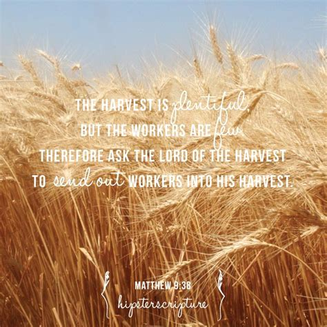 the harvest is plentiful but the workers are few matthew 9 37 38 the harvest is plentiful but the