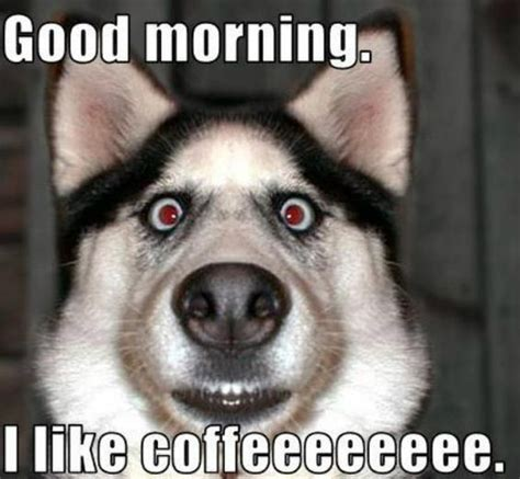 Funny Morning Memes - good morning memes http www quotesmeme com meme good