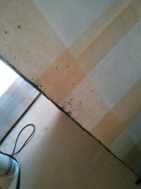 bed bug evidence recent posts pest control in reading uxbridge slough