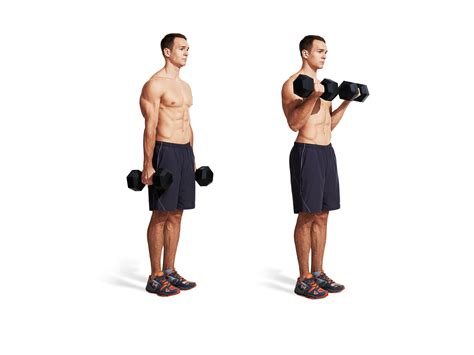 Alat Fitness Home Arm Curl dumbbell curl proper form get tips more fitness