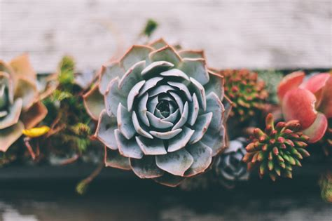 Plants That Do Not Need Much Sunlight by Successfully Growing Succulents