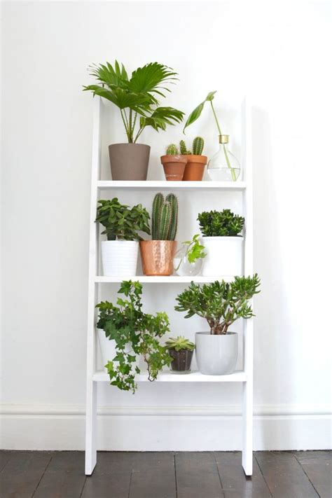 Ladder Shelf For Plants by Best 20 Plants Ideas On Plants Indoor Plant