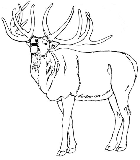 elk coloring page animals town animal color sheets elk