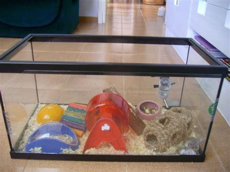 Hamster Kandang Set 10 best images about hamster aquarium on