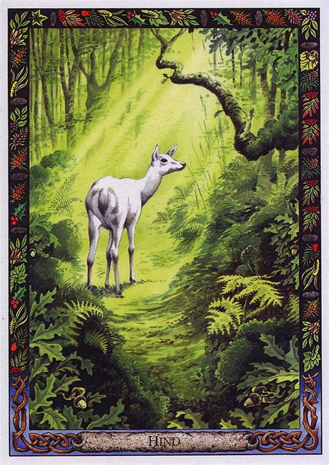 libro the druid animal oracle druid animal oracle deck by bill worthington lrs the druid animal oracle painted by bill