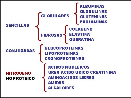 que alimentos tienen colageno y elastina biolog 205 a contemporanea 189 los glucidos los lipidos