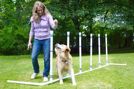 diy agility course how to build a pet agility course this house