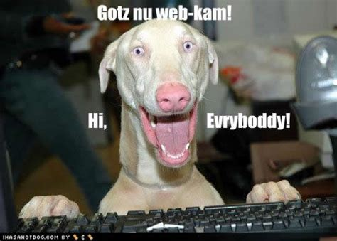 puppy captions image gallery pictures with captions n picture