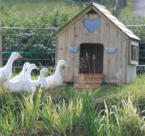 duck houses classic duck house waterfowl houses poultry housing