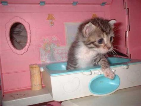 kittens in bathtub funny photo of kitten taking a bath