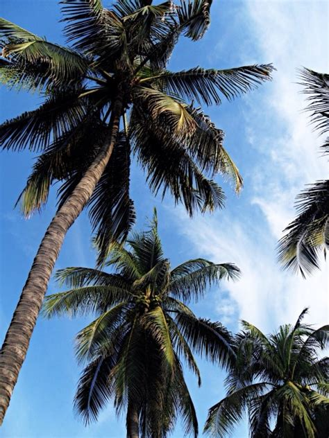 tumblr wallpaper tropical tropical backgrounds tumblr www imgkid com the image