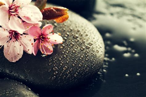 a fiori spa beautiful pink spa flowers on spa stones on water