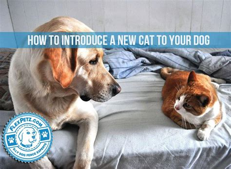 how to introduce a kitten to a how to introduce a new cat to your
