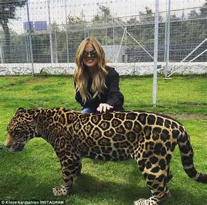 How Many Babies Does A Jaguar Khloe And Kendall Jenner Play With Rescued Baby
