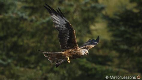 red kites   sony ar ii  sigma mc