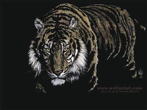 Wallpaper Black Tiger | best jungle life tiger wallpaper and pictures