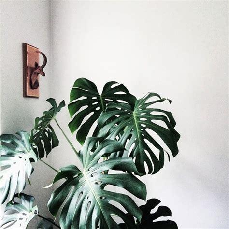 piante ornamentali per interni arredare piante ornamentali da interno dome