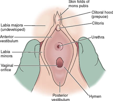 diagram hymen pediatric gynecology abdominal key