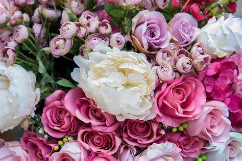 fiori ranuncoli ranuncoli facili da coltivare e la prima specie a fiorire