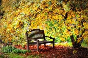 Spot Duvet Cover Autumn Bench In The Garden Photograph By Lynn Bauer