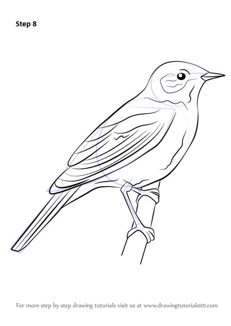 how to a bird learn how to draw a nightingale birds step by step drawing tutorials