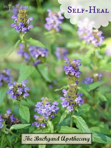 backyard medicine the backyard medicine cabinet self heal