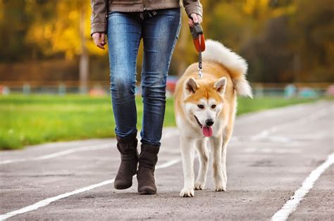 how to to walk on leash properly how to walk your on a leash breeds picture