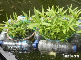 Sekam Bakar Untuk Akuaponik cara membuat instalasi akuaponik rakit apung dengan botol