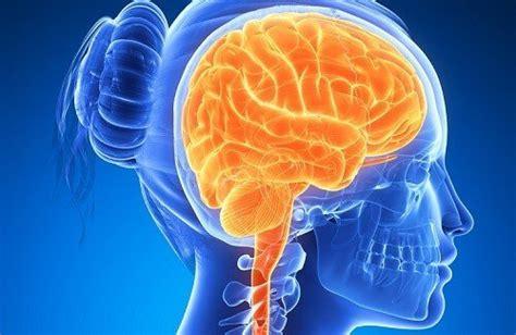alimentazione per il cervello alimenti per mantenere il cervello sano vivere pi 249 sani
