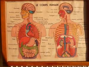 ancienne affiche scolaire anatomie humain loft
