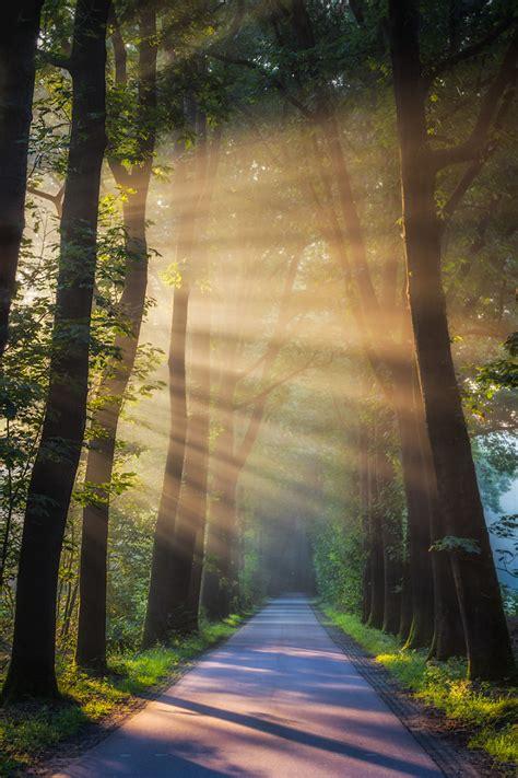 koleksi foto matahari terbit  tengah hutan  indah