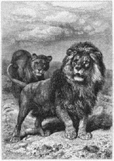 imagenes leon negro aclaraci 243 n sobre el le 243 n negro especie ya extinta
