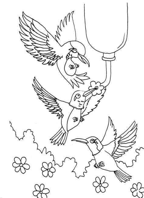 printable coloring pages hummingbirds free printable hummingbird coloring pages for