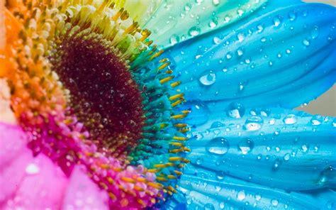 immagini desktop primavera fiori desktop wallpaper fiore di primavera