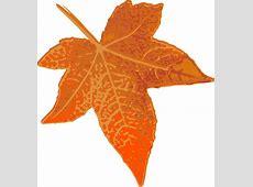 Orange Maple Leaf Clip Art at Clker.com - vector clip art ... Free Clip Art Maple Leaf