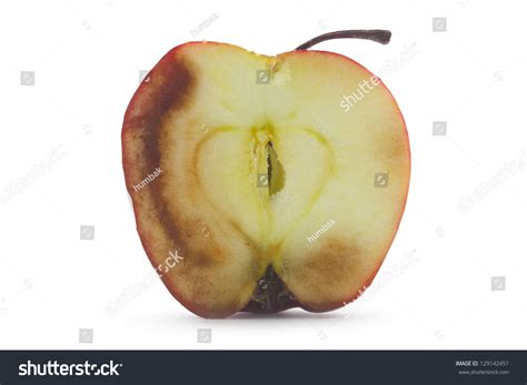 cross section of an apple image gallery decaying apple