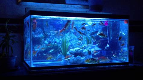 Jual Lu Led Aquarium Kaskus lu led aquarium 18 led beleuchtung bel 252 fterplatte