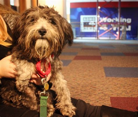 seattle humane society dogs 17 best images about pet of the week on home pictures of and the o jays