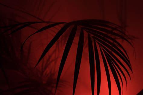 illuminazione per fotografia come usare l illuminazione per creare atmosfera di