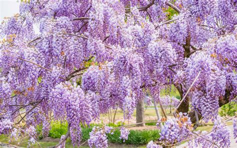 mediterrane pflanzen für den garten mediterrane pflanzen f 252 r den garten die sch 246 nsten exoten
