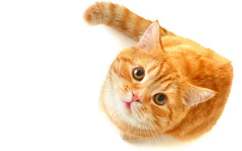 cat k wallpaper cute cat hd wallpaper animals wallpapers