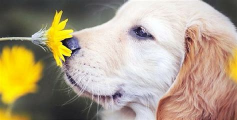 can dogs run fevers 6 hay fever symptoms to look out for in your this springtime and how to relieve them