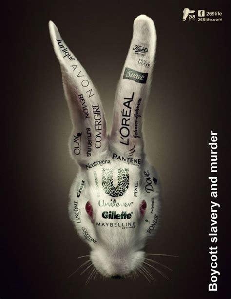 test animali 25 best ideas about animal testing on animal