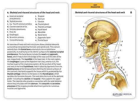 anatomy coloring book flash cards anatomy flashcards book summary official