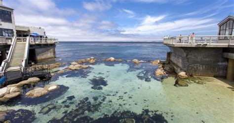 California Coast Mba by Things To Do In Monterey Ca Monterey Bay Aquarium Mba