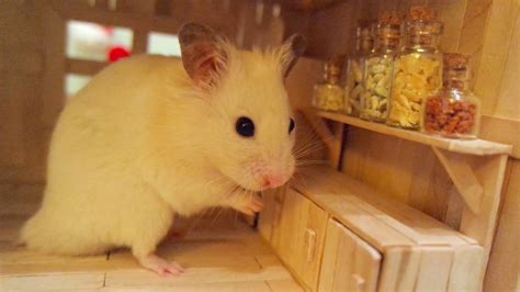 Hamster Kitchen by Tiny Hamster In His Tiny Kitchen