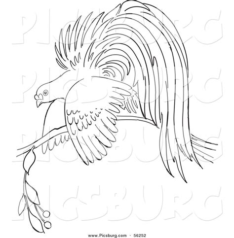 coloring pages bird of paradise bird of paradise clipart cartoon pencil and in color