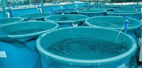 vasche per acquacoltura acquacoltura sostenibile il nuovo rapporto worldwatch