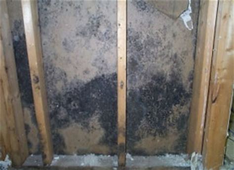 black mold on walls in bathroom removing black mold inside behind and on walls a full guide
